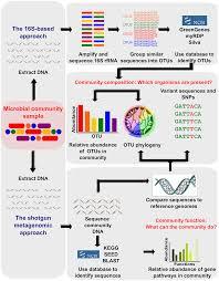 chapter 12 human microbiome analysis
