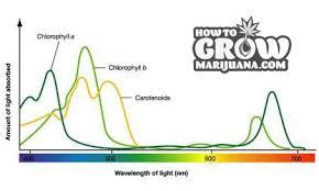 best light for plants marijuana grow lights led hps cfl