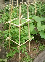 homemade bamboo tomato cages cost 0 tomato cages need to