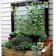 easy pea trellis making a pea trellis with kids pea trellis gardens and garden ideas