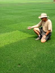 the best grass seed garden housecalls