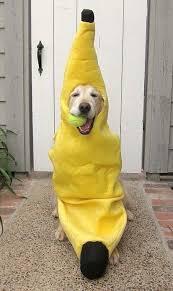 Sullivan Halloween Costume Pin Kimberly Sullivan Bananas Bananas