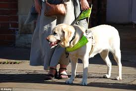 How To Go Blind Guide Dog Owners Scared Of Going Out In London Because Of Cyclists