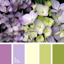 33 best green and purple images on pinterest color palettes
