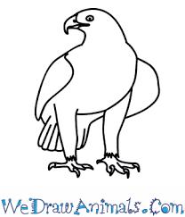 draw golden eagle