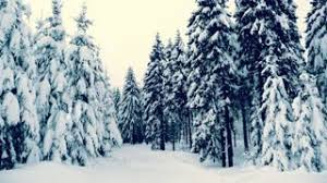 snowy christmas pictures winter snowy forest with snow covered trees falling snow and stars