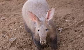 hippo u0027s wild world of animals random animal facts tolerability