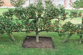 Fruit Tree Garden Layout How To Plan An Orchard Hgtv