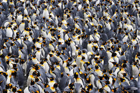 penguin 4 what we know and how to react state of digital