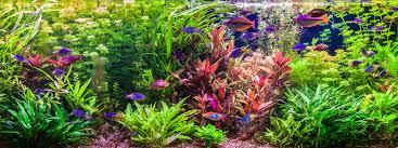 best led light for planted tank best led aquarium lighting planted reef tanks 2018 reviews