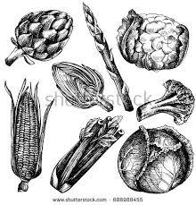 hand drawn ink sketch vegetable set stock vector 608988455