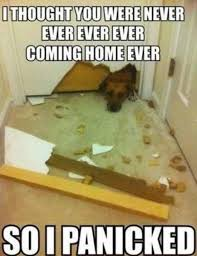 Dog Owner Meme - only dog owners would understand these funny photos laugh 4