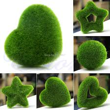 Moss Vase Filler Online Buy Wholesale Moss Ball Plant From China Moss Ball Plant