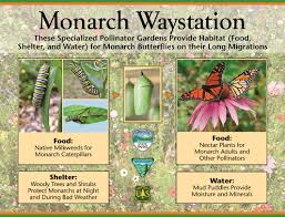 southern native plant nursery somonarchs org waystations