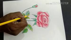 how to draw color a rose easy step by step for kids youtube