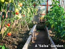 100 salsa garden layout how to plant a container salsa