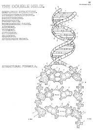 dna coloring page snapsite me