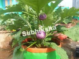 subhiksha organics grow bags terrace garden organic terrace