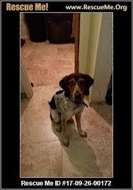 bluetick coonhound cost arizona bluetick coonhound rescue u2015 adoptions u2015 rescueme org