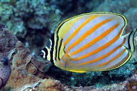 saltwater fish live corals marine invertebrates