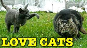 fluffy cat bluebell kitty backyard birds and spiders youtube