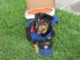 halloween delivery dominos delivery dog rockysace halloweenpets halloween pinterest