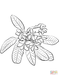 red jasmine plumeria rubra coloring free printable