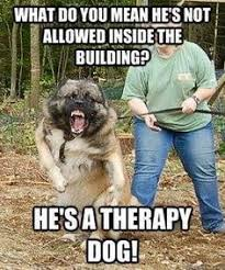 Property Management Memes - yeah no i really need some funny right now pinterest property