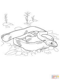 black rat snake coloring page free printable coloring pages