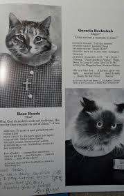 cat high yearbook a year book for cat cat high give up