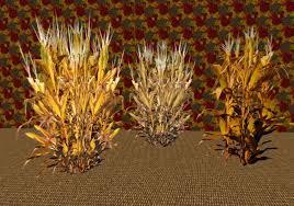Second Life Marketplace Dried Corn Stalk 1 2 3