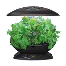 amazon com aerogarden 7 with gourmet herb seed kit plant