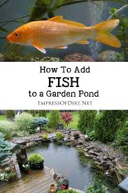 How To Build A Fish Pond In Your Backyard Best 25 Diy Pond Ideas On Pinterest Turtle Pond Fish Ponds And