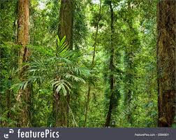 beautiful plants photo of beautiful plants trees in rain forest