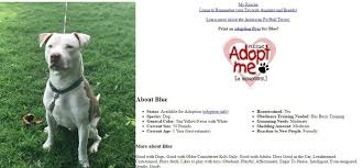 american pitbull terrier puppies for adoption after fatal pit bull attack when will we do something about this
