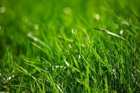lawn care programs for do it yourself ta lawn care services