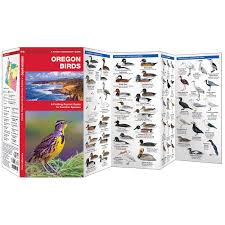 oregon birds waterford field guide