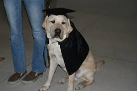 dog graduation cap and gown graduation the lone girl in a crowd