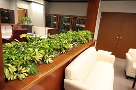 office design keeping plants in the office can help clean air