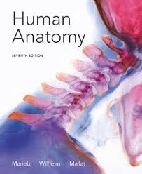 Human Anatomy And Physiology 8th Edition A U0026p Test Banks Downloads