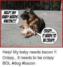 Dog Bacon Meme - dog bacon meme 28 images pinterest the world s catalog of