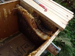 Harvesting Honey From Top Bar Hive How To Avoid Cross Comb In Top Bars And Langstroth Hives Overall