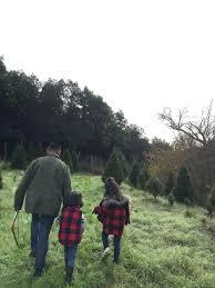christmas tree picking u2014 ismerai