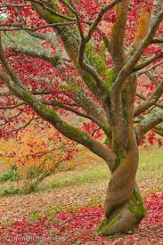 364 best trees beautiful trees images on nature