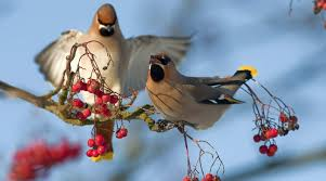 help conservation by counting birds this weekend birdlife