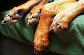 comment empecher chien de monter sur le canapé empêcher mon chien de monter sur le canapé
