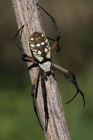 288 best arachnids images on pinterest spider spiders and insects