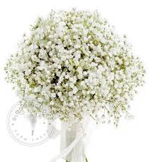 baby s breath flowers wholesale baby s breath million free shipping nationwide