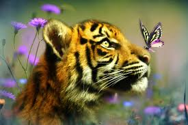 tiger cub and butterfly tiger