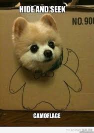 Cutest Memes - cute memes google search cutest memes ever pinterest memes